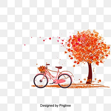 Autumn orange bicycle under maple, Bicycle, Maple Leaf, Maple PNG and Vector