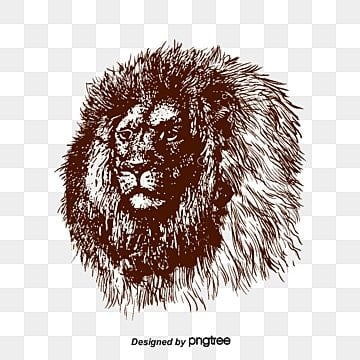vector lions head, Lion, Sketch, Lion's Head PNG and Vector