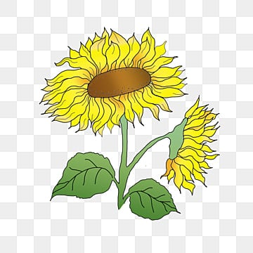 Sunflower png images download 5414 png resources with transparent sunflower yellow sunflower sunflower clipart png image and clipart mightylinksfo