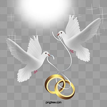 Vector wedding ring, HD, Pretty, Pigeon PNG and Vector