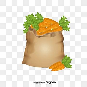 Vector De Zanahoria Png Vectores Psd E Clipart Para Descarga Gratuita Pngtree Es la hortaliza más importante y de mayor consumo de la familia. vector de zanahoria png vectores psd