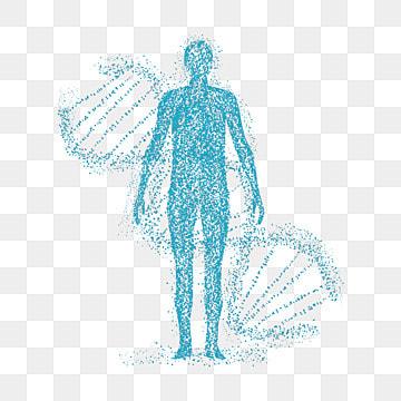 Fotos de genética ADN humano, ADN, Hereditaria, Gene PNG y Vector