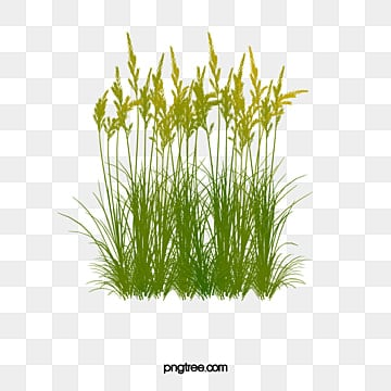 Reeds Png Vector Psd And Clipart With Transparent Background For Free Download Pngtree