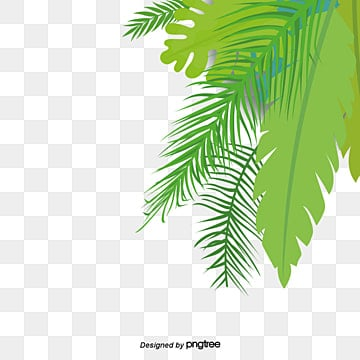 coconut leaves png images vectors and psd files free free palm tree vector ai free palm tree vector ai