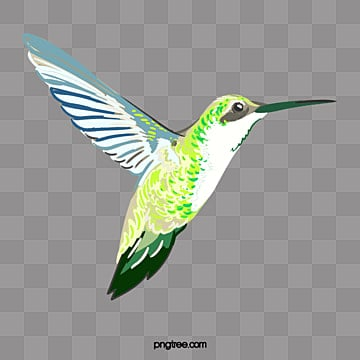 Hummingbird Clipart Images 213 Png Format Clip Art For Free