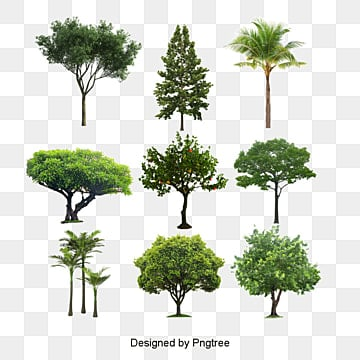 Tree PSD, 30,472 Photoshop Graphic Resources for Free Download