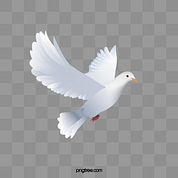 Dove Png, Vector, PSD, and Clipart With Transparent