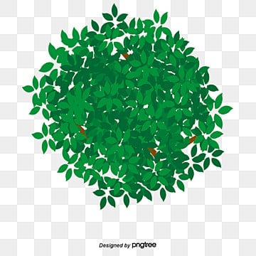 Tree crown, Green, Leaves, Decorative Material PNG Image
