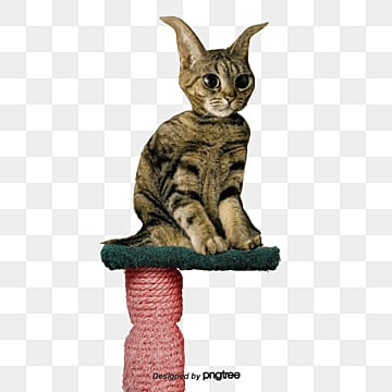 Cat Png Images Download 12 326 Cat Png Resources With