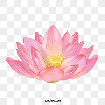 Lotus flower png images vectors and psd files free download on lotus flowers lotus flowers lotus clipart png image and clipart mightylinksfo