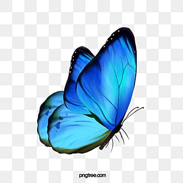 36000 Butterfly Effect Hd Photos Free Download Lovepik Com