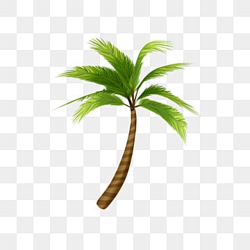 coconut tree, Coconut Tree, Greenery, Decoration PNG and PSD