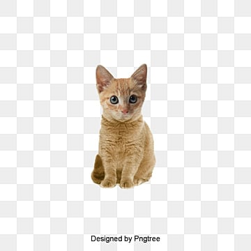 Cat PNG Images, Download 12,249 Cat PNG Resources with