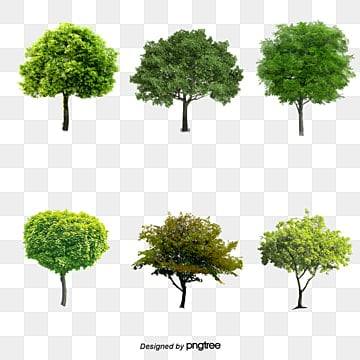 Tree PSD, 30,540 Photoshop Graphic Resources for Free Download
