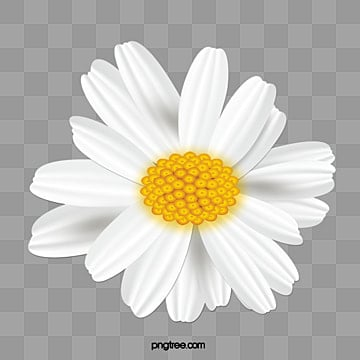 Small Daisy Png Images Vectors And Psd Files Free Download On Pngtree