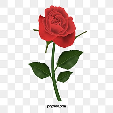 Vector rose sea png images vectors and psd files free download rose rose vector rose rose png and vector voltagebd Gallery