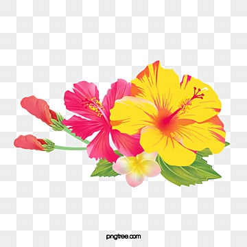 Hand painted hibiscus flower hibiscus flower flowers leaf png image for free download - Hibiscus images download ...