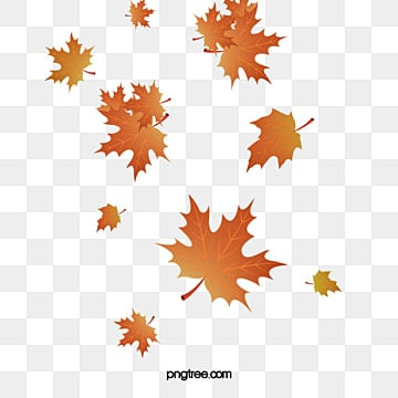 Autumn Leaves Png Images Vector And Psd Files Free Download On Pngtree