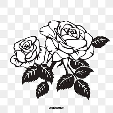 Black rose png images vectors and psd files free download on pngtree black rose rose flowers black png image and clipart mightylinksfo