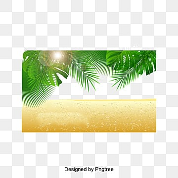 Palm beach, Coco, Trees, Palm PNG and PSD