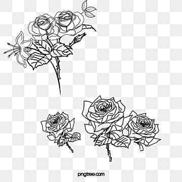 flower sketch png images vectors and psd files free