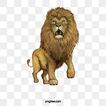 african lion, Lion Clipart, Male Lion, Animal PNG and PSD