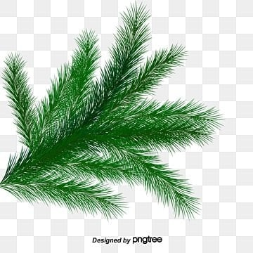 Christmas Greenery Vector.Christmas Greenery Png Vector Psd And Clipart With