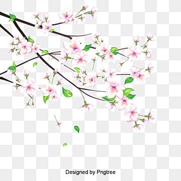 Fleur De Cerisier Japonais Png Images Vecteurs Et Fichiers Psd