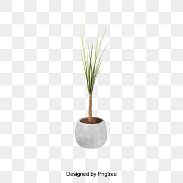Potted Plant PNG Images | Vector and PSD Files | Free ...