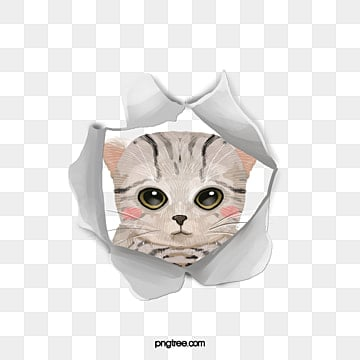 Pet cat, Kitty, Cat Child, Cat PNG Image