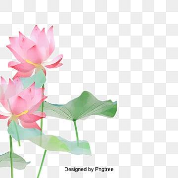 Flor De Loto Imágenes Png Vectores Y Archivos Psd Descarga
