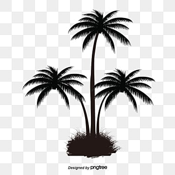 Coconut Tree Png Images Vectors And Psd Files Free Download On