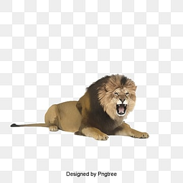 a lion, Lion Clipart, Wild Nature, Ecology PNG and PSD