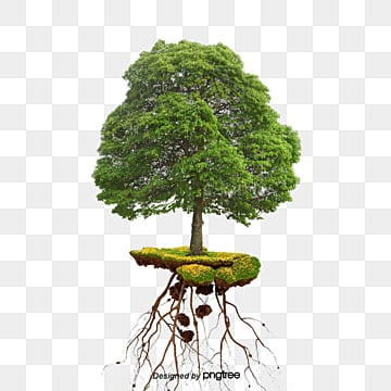 Tree Roots Png Images Vectors And Psd Files Free Download On Pngtree