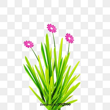 Reed grass Ornament, Reed, Summer Reed Element, Plant Material PNG Image