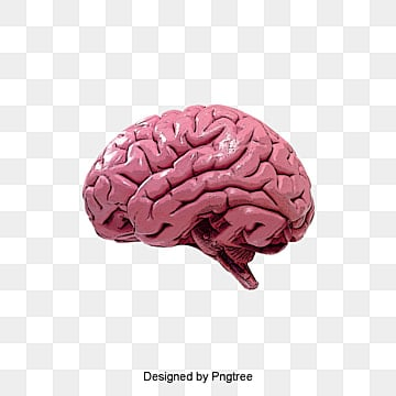 human brain, Brain Clipart, Humanity, Brain PNG and PSD