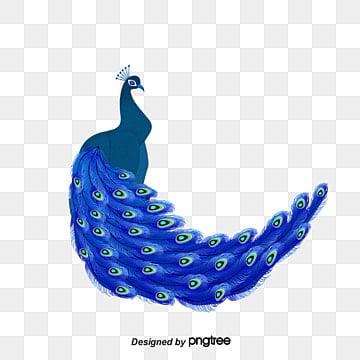 Best Peacock Clipart #12893 - Clipartion.com