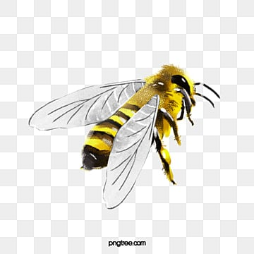 Watercolor Bee Yellow Animal PNG And PSD