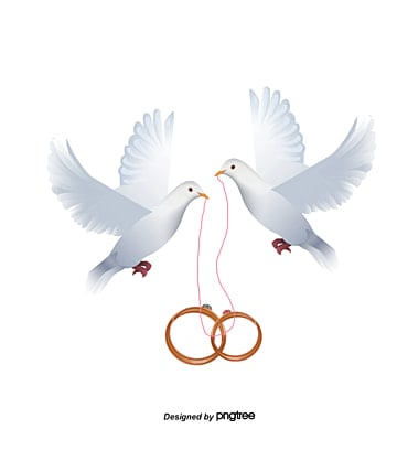 Dove inlay ring, Ring, Pigeon, Feige PNG Image