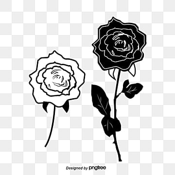 Black And White Rose Png Vectors Psd And Clipart For Free