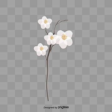 Real flower png images vectors and psd files free download on white flowers creative flowers flower decoration fresh png image and clipart mightylinksfo