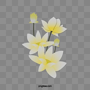 White lotus png images vectors and psd files free download on white lotus mightylinksfo