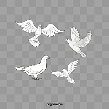 Pigeons,bird Free PNG and PSD