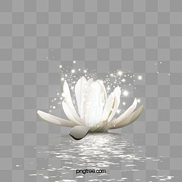 Lotus Flower Png Vector Psd And Clipart With Transparent