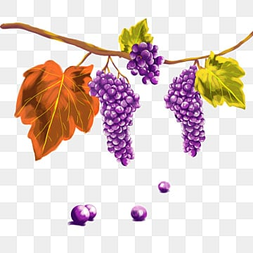 Grapes Border PNG Images | Vectors and PSD Files | Free ...