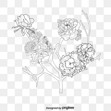 vector peony flower png vectors psd and clipart for free download rh pngtree com peony vector peony vector