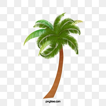 Palm Tree Png Vectors Psd And Clipart For Free Download