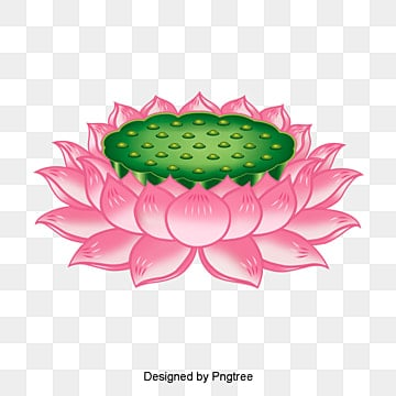 vector lotus seat, Lotus Clipart, Lotus Seat, Religion PNG and Vector