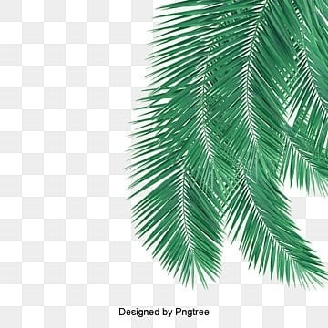 Coconut png images vectors and psd files free download on pngtree green palm leaves picture material green leaves green coconut png image and clipart toneelgroepblik Gallery