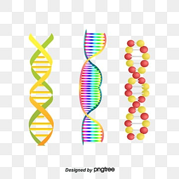 dna structure picture, Biotechnology, Genetic Material, Double Helix PNG and PSD